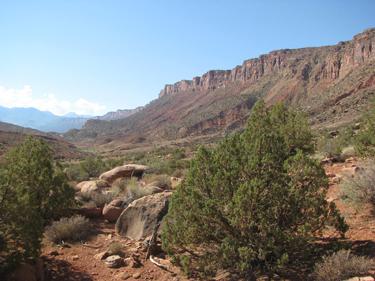 A Desert Environment