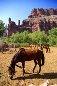 Horse at Supai